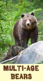 Multi Age Bear